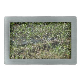 Louisiana Swamp Alligator in Jean Lafitte Rectangular Belt Buckles