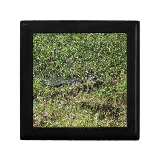 Louisiana Swamp Alligator in Jean Lafitte Trinket Boxes