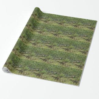 Louisiana Swamp Alligator in Jean Lafitte Wrapping Paper