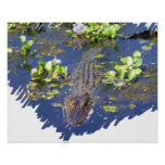 Louisiana Swamp Gator Hunter Poster