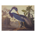 Louisiana Tricolored Heron Audubon Vintage Art Poster