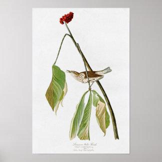 Louisiana Water Thrush John Audubon Birds America Poster