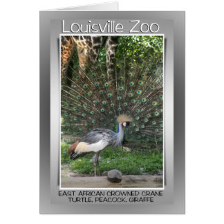 LOUISVILLE ZOO ANIMAL LINEUP CRANE, PEACOCK CARD