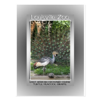 LOUISVILLE ZOO ANIMAL LINEUP CRANE, PEACOCK POSTCARD