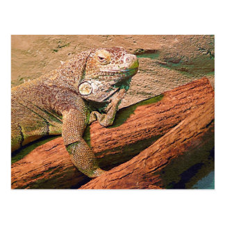 Lounging Lizard Postcard