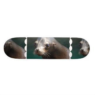 Lovable Sea Lion Skate Board Deck