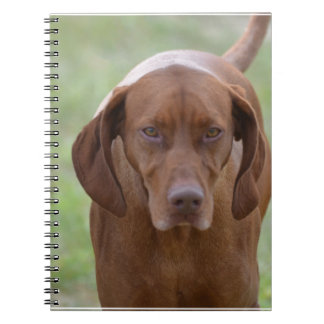 Lovable Vizsla Note Book