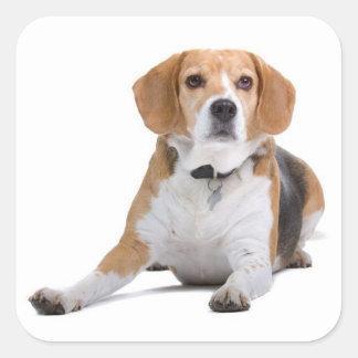 Love Beagle Puppy Dog Sticker / Seal Square Sticker