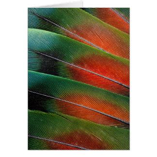 Love bird feather close-up card