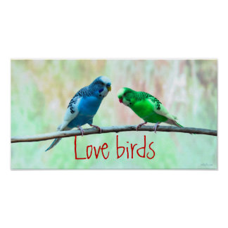 Love birds, colorful Parakeets, elegant Poster