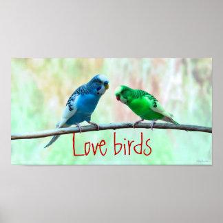 Love birds, colourful Parakeets, elegant Poster