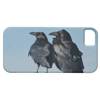 Love Birds iPhone 5 Case