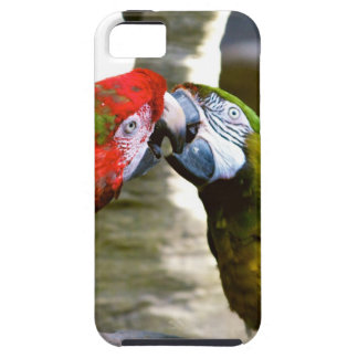 Love Birds Kissing Macaws iPhone 5 Cases