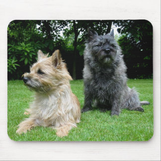 Love Cairn Terrier Puppy Dog Mousepad
