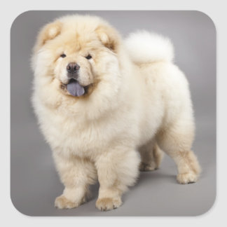 Love Chow Chow Puppy Dog Greeting Stickers