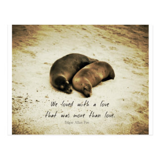Love couple romantic quote sea lions on the beach postcard