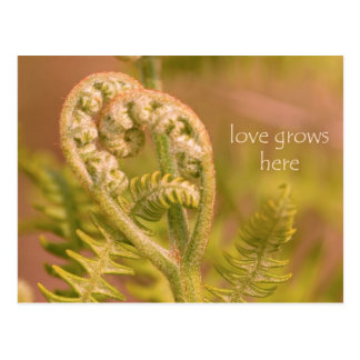 Love Ferns Postcard
