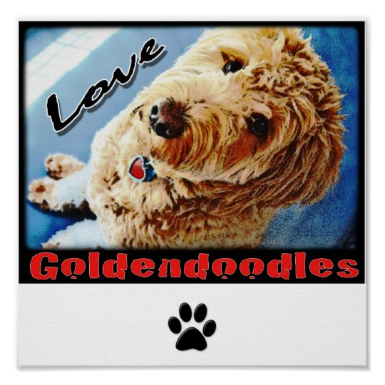 Love Goldendoodles Poster