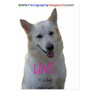 Love is a four legged word postcard