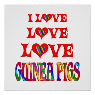 Love Love Guinea Pigs Poster