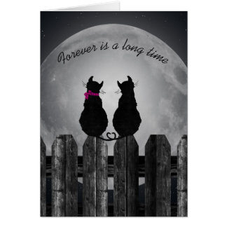 love-pair of cats in the moonlight card