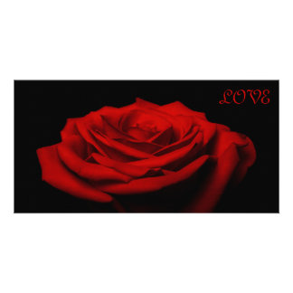 Love petals - Red rose Photo Card