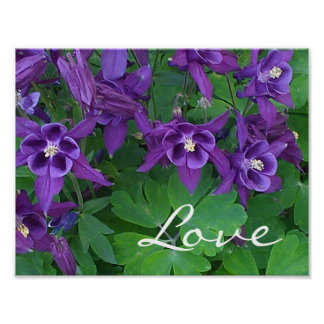 "Love - Purple Columbines -11""x 8.5"" Poster"