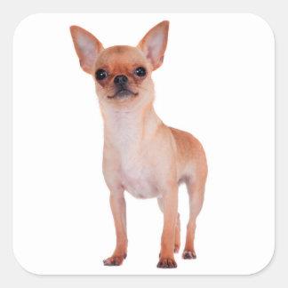 Love Short Hair Chihuahua Puppy Dog Square Sticker