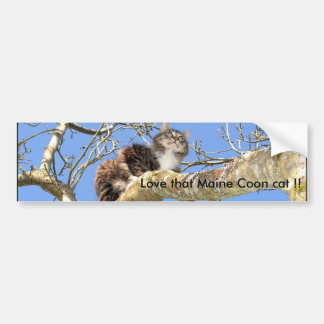 Love that Maine Coon cat !! Bumper Sticker