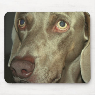 Love Weimeraner  Mouse Pad