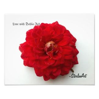 Love with Dahlia Red Photographic Print