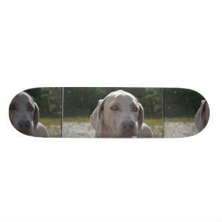 Loveable Weimaraner Dog Skateboard Deck