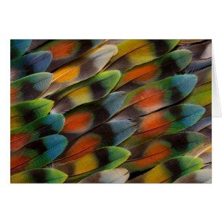 Lovebird Feather Pattern Card