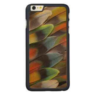 Lovebird Feather Pattern Carved Maple iPhone 6 Plus Case