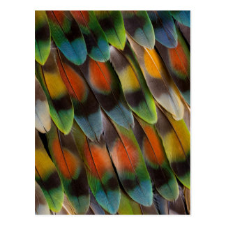 Lovebird Feather Pattern Postcard