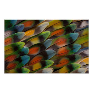 Lovebird Feather Pattern Poster