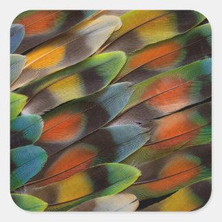 Lovebird Feather Pattern Square Sticker