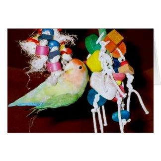 Lovebird on toy card