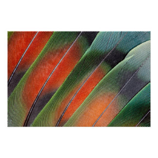 Lovebird Tail Feather Design Poster