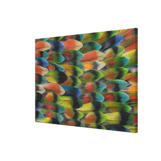 Lovebird Tail Feather Pattern Canvas Print