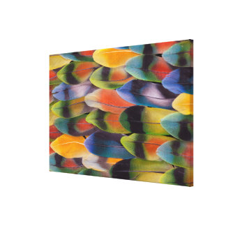 Lovebird Tail Feathers Abstract Canvas Print
