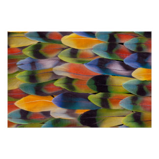 Lovebird Tail Feathers Abstract Poster