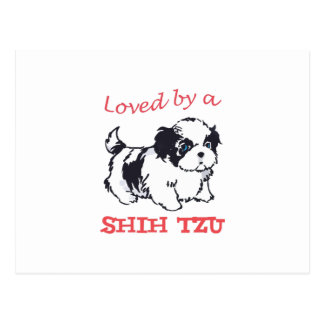 LOVED BY A SHIH TZU POSTCARD