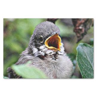 lovely bird tissue paper