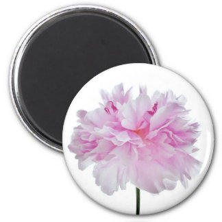 Lovely Bright wink Peony Flower Photo 2 Inch Round Magnet