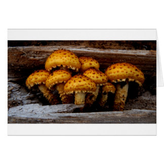 Lovely Bunch of Wild Mushrooms Card