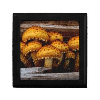 Lovely Bunch of Wild Mushrooms Keepsake Boxes