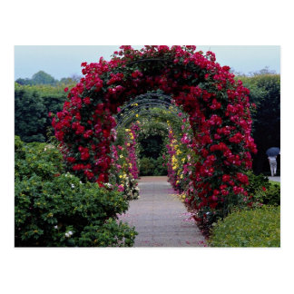 Lovely Climbing Rose Arches Postcard