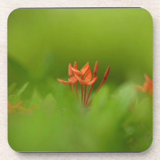 Lovely flower in the world beverage coasters