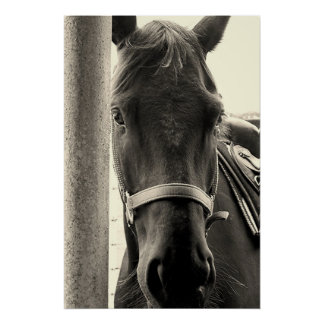 Lovely Horse in Sepia Wall Poster